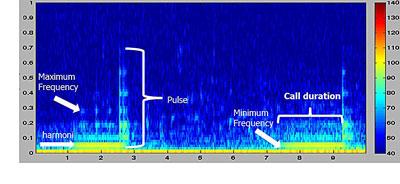 FM-Call-1-WEB