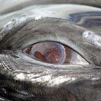 Benjamin-Whale-Eye-WEB