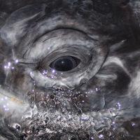 Steve-Whale-Eye-WEB