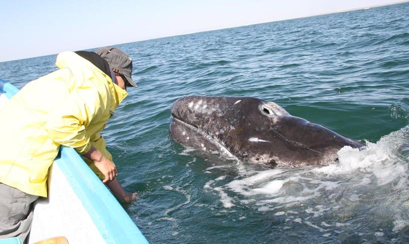 Informe final de las ballenas grises temporada invernal 2012