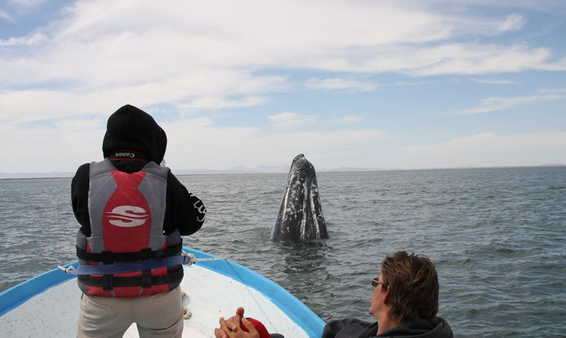 2014 Gray Whale Research Report