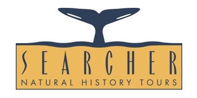 Searcher Logo