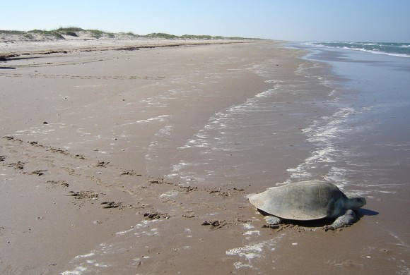 2009 Sea Turtle Research Report