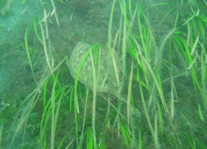 2010 Eel Grass Update