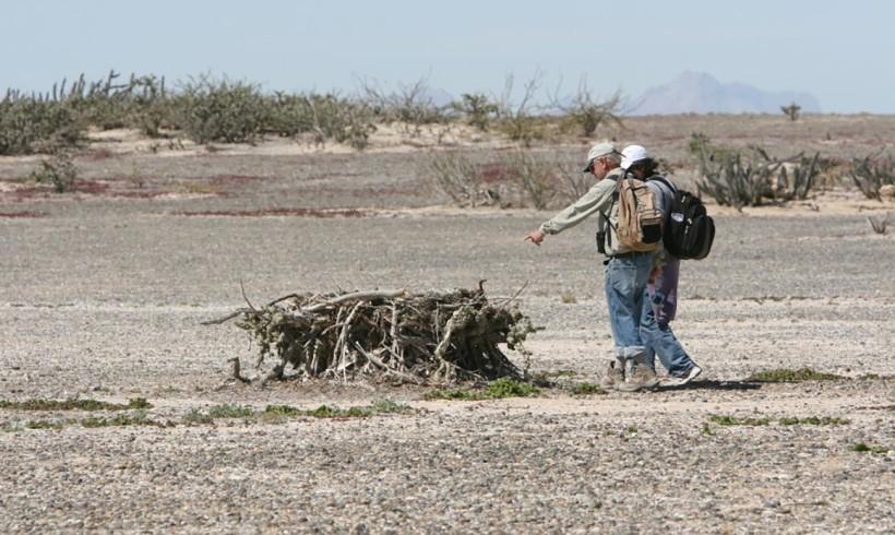 Ornitólogos visitan colonias insulares de aves y descubren predacion por coyotes