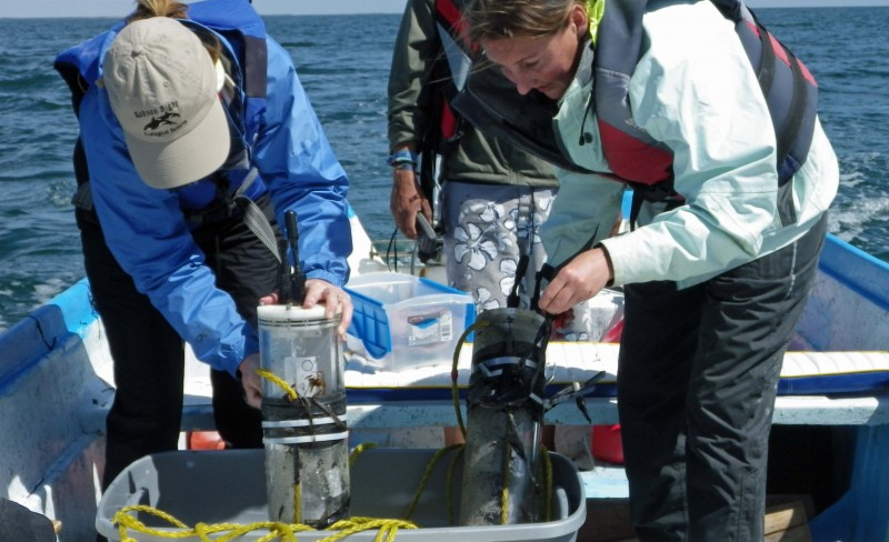 Reporte del programa de acústica pasiva de ballenas grises 2012