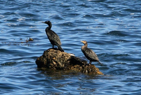 Two birds on floating trunks