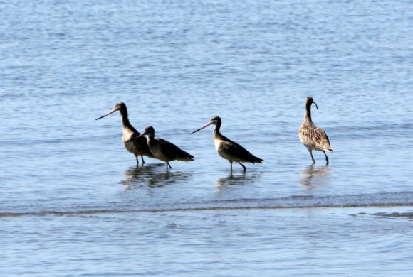 Four birds in the water