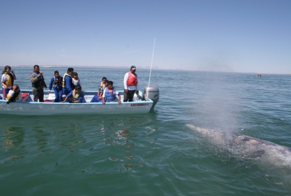Students and teachers on boats with a grey whale
