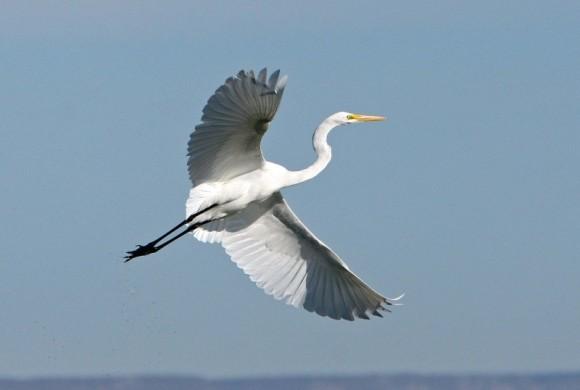Wings wide in air