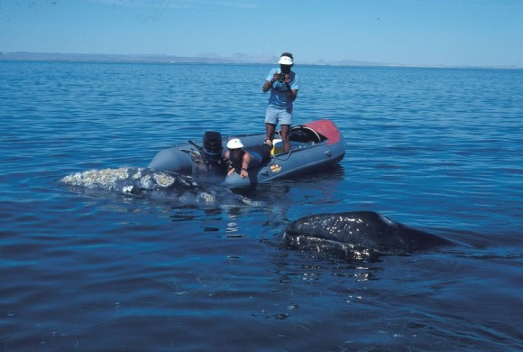 Group of scientists in a raft/boat interacting with whales