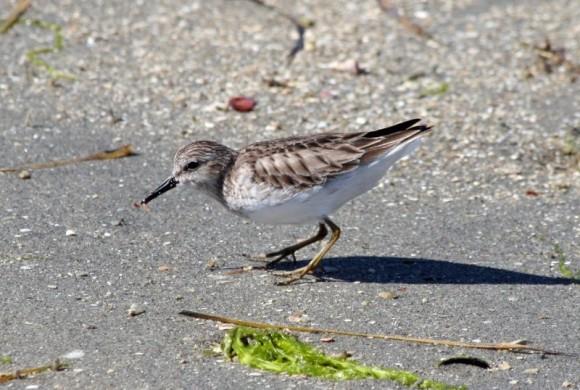 Little bird eating something in the sand