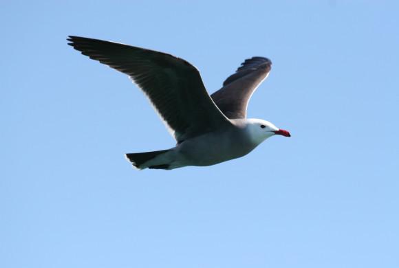 Bird flying against blue skies
