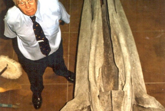 Man standing beside a whale skeleton head at the San Diego Museum of Natural History