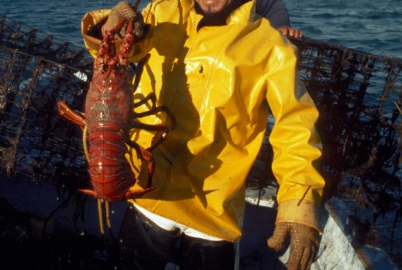Scientist holding up a huge red lobster by the tail