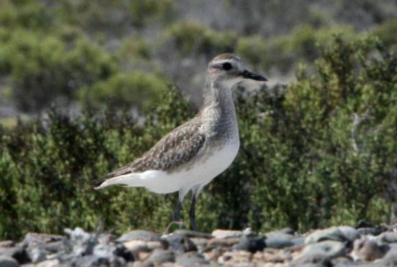 Bird walking along rocks