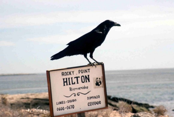 Sign with a black bird perched on top