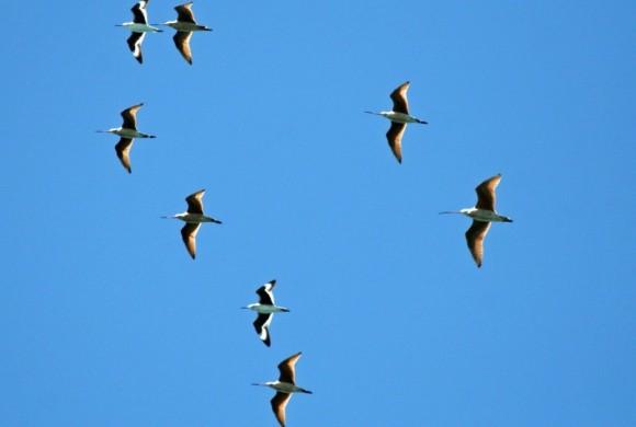 Eight birds flying against blue skies
