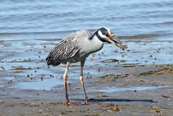 Bird getting a snack