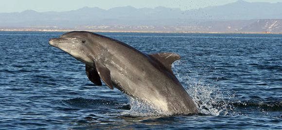 Bottlenose Dolphin Catalog Established