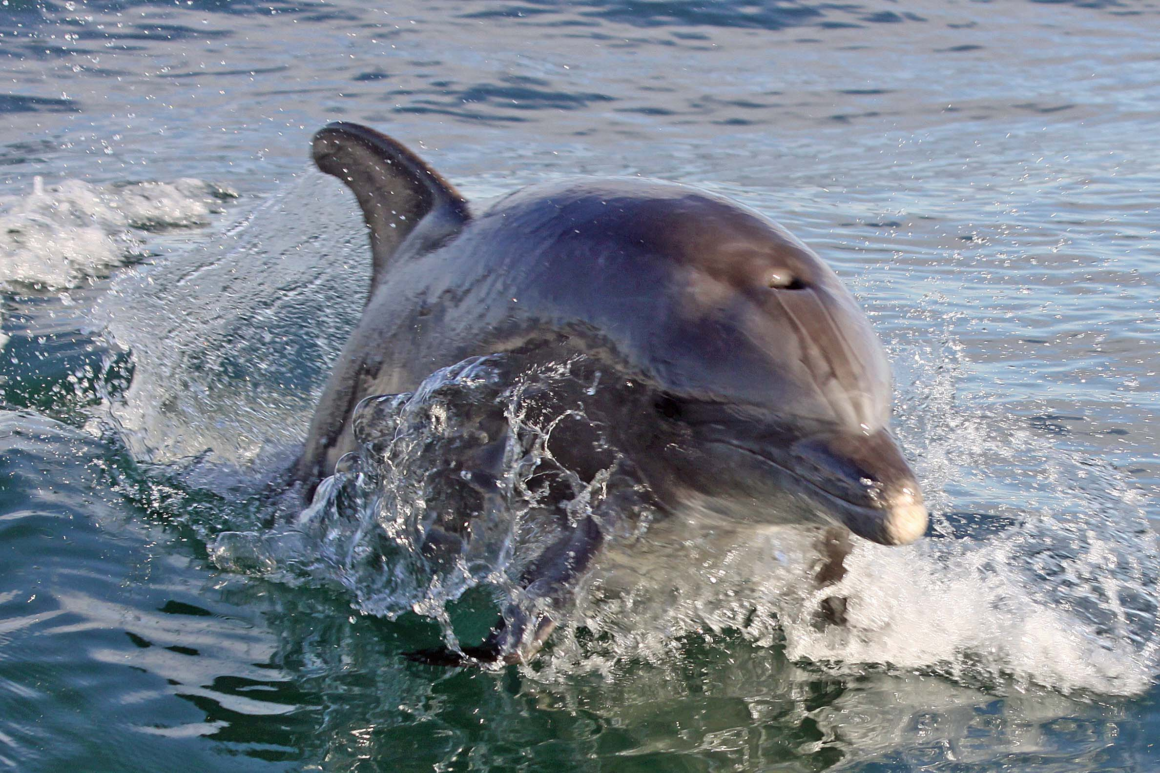 Bottlenose-Dolphin-WEB-IMG_1956